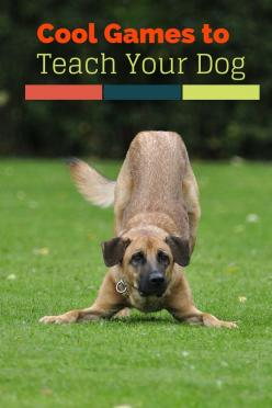Enjoy a little bonding time during dog training with these five cool games you can teach your dog. Your pup will learn new skills while having fun!: Dog Trick, Puppy Thing, New Puppy Idea, Dog Game, Dog Training Trick, Training Puppy, Train Dog