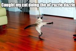 Enjoy the Best of Funny here via http://funnypicdump.com #humor: Funny Animals, Funny Cats, Funny Picture, Funny Stuff, Humor, Funnies, Razzle Dazzle