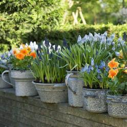 ...even those with small, quiet blooms can be regaled for their beauty!: Garden Ideas, Can, Outdoor, Gardens, Spring, Garden, Container Gardening, Flower