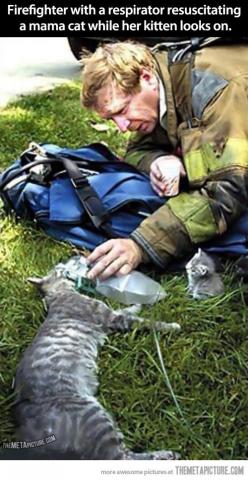 Eyes only slightly watered…: Cats, Animals, Heroes, Humanity Restored, Firefighters, Kittens, Mama Cat