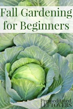 Fall Vegetable Gardening for Beginners - Tips for getting started with a vegetable garden this fall: Gardening Tip, Garden For Beginner, Fall Landscape, Fall Vegetable, Vegetable Garden