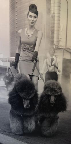 Fashionable woman walking Italian poodles. facebook.com/sodoggonefunny: Poodles Vintage, Standard Poodles, Pets Poodles, Italian Poodles Oh, Pretty Things, Vintage Dog, Poodles Dog, Animal, Things Poodle