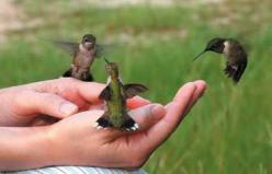 Five Steps to Feeding Hummingbirds in Your Hand | Birds & Blooms: Hand, Humming Birds, Animals, Kitchen Window, Gardening Outdoor, Hummingbirds