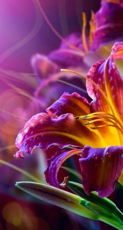 ❈ Fleurs Foncées ❈ dark art photography flowers & botanical prints - daylilies: Purple, Beautiful Color, Beautiful Flowers, Bloom, Day Lilies, Flowers, Garden, Photography, Flower