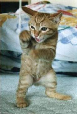 Float like a butterfly...sting like a bee! #showmecats #theFunny #FunnyCats: Kitten, Animals, Funny Cats, Pets, Kung Fu, Butterfly Sting, Funny Animal, Kitty
