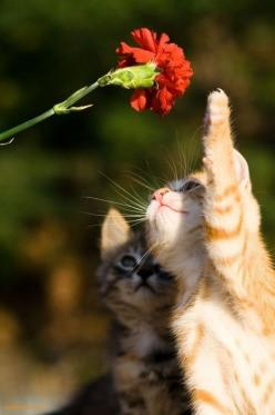 Flower kittens.   ...........click here to find out more     http://googydog.com: Kitty Cats, Animals, Sweet, Pets, Kitty Kitty, Kittens, Kitties, Photo, Flower