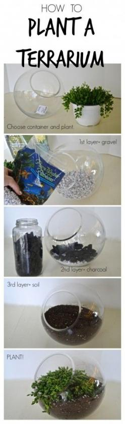 Follow these simple steps to create amazing terrariums out of just about any container you can find!: Plants Terrarium, Indoor Terrarium, Garden Design Idea, Diy Terrarium, Succulent Terrarium, Plant Terrarium, Diy Terranium