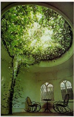 Forget not that the Earth delights to feel your bare feet and the winds long to play with your hair. -Kahlil Gibran: Idea, Dream, Green, House, Space, Place, Garden, Room