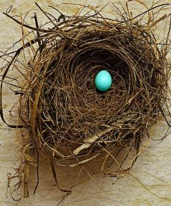 Fragile  This nest and robin's egg were found on separate occasions in my yard.   The egg was unbroken, on the ground, nowhere near a tree.   The nest isn't a robin's, but I don't know who it belonged to.: Eggs, Blue, Bird Nests, Spring, R