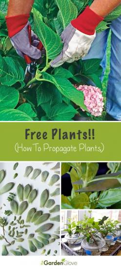 Free Plants!! • Tips and How-To's on propagating plants!: Green Thumb, Garden Ideas, Propagate Plants, Propagating Plants, Houseplant, Free Plants