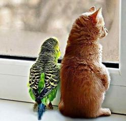 Friends.: Cats, Kitten, Animals, Window, Pets, Odd Couples, Animal Friends, Dog, Birds