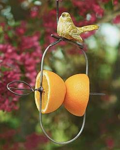 Fruit Feeder: Use halved apples, oranges, grapefruit or pears  Comes with built-in hanger  Small, decorative ceramic bird on top  Can be used all year round  Orioles, scarlet tanagers, mockingbirds, grosbeaks and other fruit-lovers will flock to this simp
