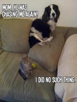 Funny Animal Pictures – 25 Pics: Funny Animals, Cats, Dogs, Pet, Funny Picture, Funnies
