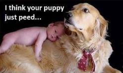 Funny Animal Pictures � 28 Pics...I am addicted to these!: Animals, Dogs, Pet, Funny Stuff, Puppy, Funnies, Funny Animal, Baby