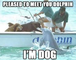 Funny Animal Pictures With Captions: Picture, Kiss, Animals, Friends, Dogs, Dolphins, Funny, Photo