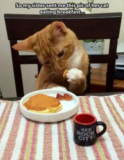 funny cat pictures: Cat Eating, Animals, Eating Breakfast, Funny Cats, Crazy Cat, Funny Animal, Kitty, Cat Lady
