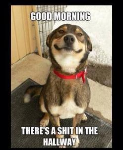 Funny cats, funny pics, hilariousness, humour animal, jokes funny …For more hilarious humor and funny pics visit www.bestfunnyjokes4u.com: Animals, Dogs, Pet, Funny Stuff, Funnies, Humor, Things, Smile