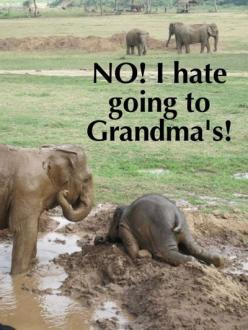 Funny elephant baby. For more funny animal picture jokes visit www.bestfunnyjokes4u.com/funny-animal-pics/: Babyelephants, Babies, Animals, Mud, Baby Elephants, Funny, Elephants Throw