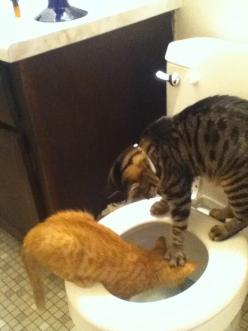 funny: Funny Animals, Funny Cats, Pet, Funny Stuff, Funnies, Humor, Kitty