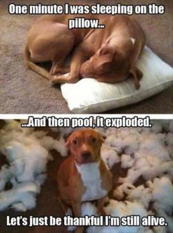 Funny pictures | Funny Pictures . more here http://artonsun.blogspot.com/2015/05/funny-pictures-funny-pictures-more-here.html: Animals, Dogs, Funny Stuff, Funnies, Funny Animal, Poof