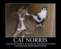 funny pictures of animals attacking people | Funny Pictures, Fails, Crashes, Stupid People, Drinking Fails and More: Cats, Animals, Cat Norris, Funny Stuff, Funnies, Funny Animal, Dog