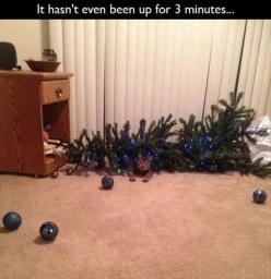 Funny Pictures Of Day - 45 Pics: Cats, Animals, Funny Stuff, Humor, Funnies, Funny Animal, Christmas Trees