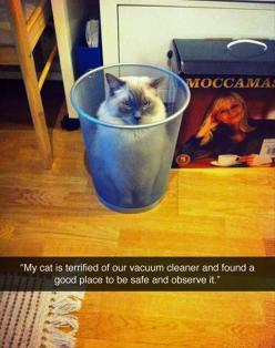 Funny Pictures Of The Day � 91 Pics: Cats, Vacuum Cleaners, Animals, Funny Pictures, Crazy Cat, Silly Cat, Funnie, Cat Lady