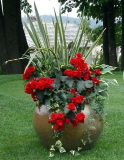 Gallery - Seasonal Color for Commercial Landscape - Signature Landscape Services: Garden Container, Container Gardens, Potted Plants, Flower Pot, Color, Container Flower, Container Planting, Container Gardening