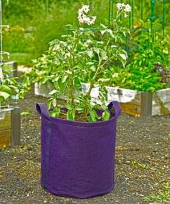 Gardener's Best® Potato Grow Bag: Garden Ideas, Potato Grow, Patio Garden, Potatoes, Gardener S Best 174, Gardener 8217 S Best 174, Gardening Notions, Bags