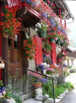 Germans love their flowers. Mom and Grandma can't stop working in their gardens even well into their 80's and 90's.: Color, Beautiful, Gardens, Gardening, Windows, By, Flowers, Window Boxes