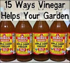 Get Rid of Deer, Rabbits, Racoons, and Cats: These animals hate the smell of vinegar and it will keep them out of your garden naturally and safely. It is best to...: Rabbit, Cats Out Of Garden, Vinegar Help, Animals Hate, Garden Naturally, Gardening Ideas