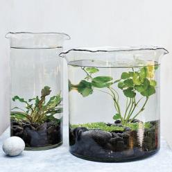 Get some underwater plants from a pet store, some large inexpensive vases and voila, you have an adorable (low maintenance!) house plant.  I really love this idea for a desk plant at work.  For added fun, get a plant that will flower!: Water Plants, Idea,