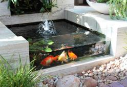 glass on the front of the fish pond: Pool Idea, Pond Idea, Water Features, Fish Pool, Outdoor, Glass, Waterfeature, Fish Ponds
