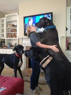 #Great #Danes: Great Danes, Animals, Dane Dogs, Kiss Greatdanes, Danes Awesome Dogs, Adorable, Baby, Greatdanes Dogs, Danes Big Dogs