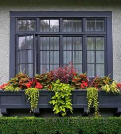 Great looking shade container arrangement from Pot Inc. of begonias, coleus, margarita vine, hakone grass, and creeping jenny.: Hakone Grass, Container Arrangement, Outdoor, Container Plants, Gardening Windowboxes, Container Gardening, Margarita Vine, Win