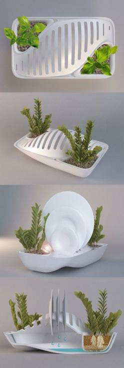 Green Dish Rack save water grow plant. I want this product NOW, and with  weddings coming up an amazingly cool gift!  BY GROUP 2: Practical Gift, Dish Racks, Green Gift, Cool Gift, Smart Idea, Cool Product Design
