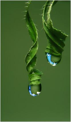 *Green http://arcreactions.com/services/social-media/: Waterdrop, Macro Photography, Green, Raindrops, ภเГคК ค๓