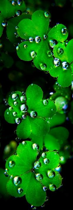 groen | green | vert | grün | verde | 緑 | color | colour | texture | style | form | macro water pearls: Bubbles Raindrops Dew, Waterdrop, Color, Green, Water Pearl, Dewdrops, Dew Drops