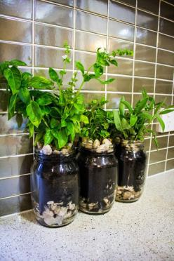 Grow herbs in mason jars and other small space (or no space) gardening ideas.: Mason Jar Herb, Gardening Small Space, Garden Ideas, Gardening Ideas, Herb Mason Jar, Herbs Mason Jar, Grow Herbs, Mason Jars