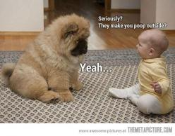 hahah precious.   ...........click here to find out more     http://googydog.com: Babies, Animals, Dogs, Pets, Funny, Chow Chow, Puppy, Kid