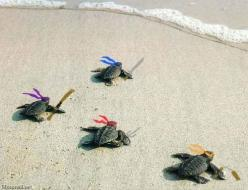 Hahahaha, little teenage mutant ninja turtles: Mutant Ninja, Animals, Teenage Mutant, Ninjaturtles, Funny, Baby, Ninja Turtles, Ninjas, Sea Turtles