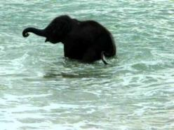 Happy Little Baby Elephant Frolicking in the Ocean: Elephants ️, Baby Elephants, Animals Elephants, The Ocean, Elephant Ocean, Elephant Frolicking, Elephant Plays