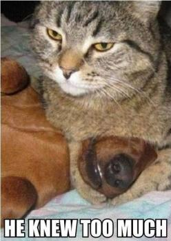 He knew too much.: Cats, Funny Animals, Dogs, Funny Cat, Funnyanimal, Funny Stuff, Funnies