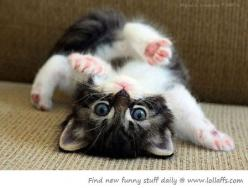 Help, I've fallen and I can't get up!: Cats, Animals, Kitty Cat, Cutenes, Pets, Funny, Adorable, Kittens, Kitties