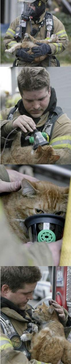 her expression in that last picture - amazing.: Cats, Picture, Firefighter, Animal Rescue, Cat Face, Sweet, My Heart, Kitty