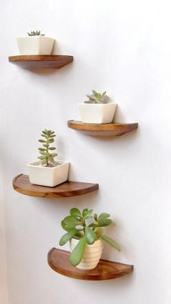 Hey, I found this really awesome Etsy listing at https://www.etsy.com/listing/184427209/half-round-walnut-shelf-floating-wood: Floating Shelves, Idea, Bathroom Plant, Half Round, Wood Shelf, Small Simple Bathroom, Walnut Shelves, Round Walnut