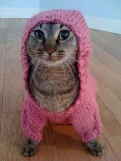 Hoodie cat ~ Oh my. This cat looks as if it's just waiting on the opportunity to run right out of that hoodie. hahaa!: Sweaters, Animals, Meow, Funny Cats, Pets, Kitty Kitty, Things, Cat Lady