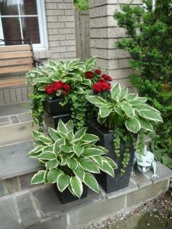 Hostas in a pot: every spring they return, in the pot! Add geraniums and ivy for a fuller look. @ Home Improvement Ideas: Cough, Green Thumb, Container Garden, Garden Outdoor, Can, Return In, Add Geraniums, Gardening Outdoor