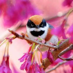 how can anything so adorable look so very ferocious! a most ferocious little grandly coloured creampuff!!!: Animals, Color, Baby Owl, Beautiful Birds, Angry Birds