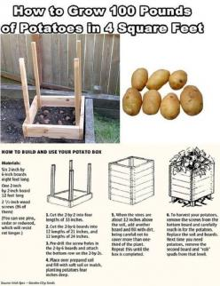 How To Build The Potato Box | Grow 100 Pounds Of Potatoes #survivallife www.survivallife.com: Square Feet, Outdoor, Growing Potatoes, 100 Pounds, Grow 100, Garden, Grow Potatoes